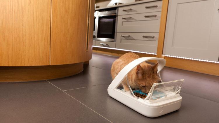 Hranitoarea automata pentru pisici, avantaje pentru stapani